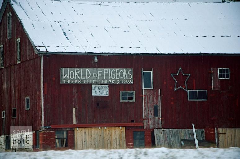 World of Pigeons. Pennsylvania Turnpike. © samlowephoto 2011